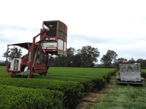 8 Harvester full of tealeaves